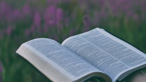 Une Bible avec un champs de fleurs en arrière-plan
