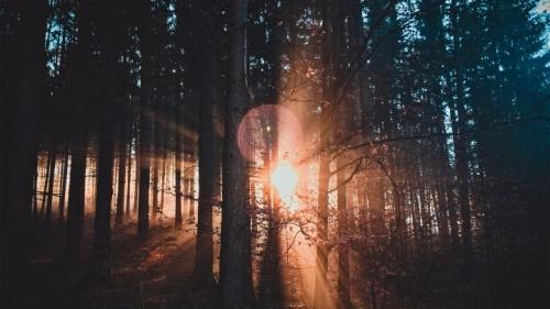 À en juger par les nombreux exemples de propriétés physiques soigneusement équilibrées dont nous sommes témoins, il est clair que Dieu a préparé notre Univers pour en faire un « berceau » pour la vie.