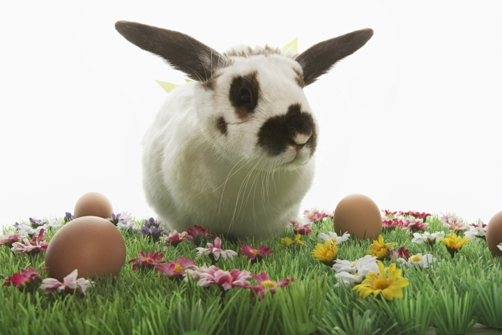 Un lapin noir et blanc dans l'herbe verte entourée d'oeufs de Pâques colorés.