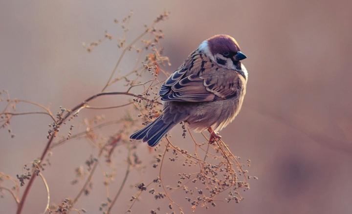 Un petit oiseau