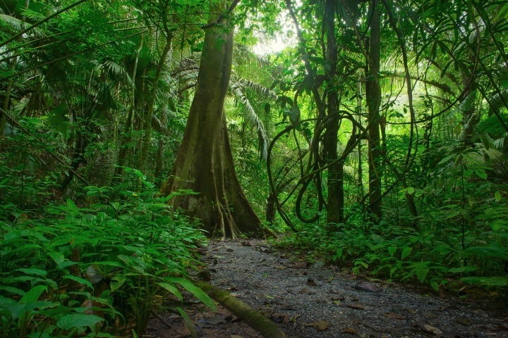 Une jungle